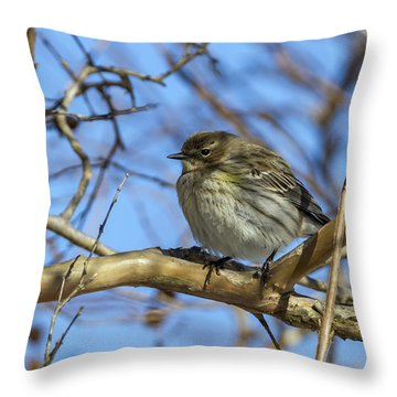 Yellow-rumped Warbler Perched Throw Pillow
