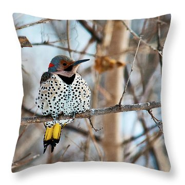 Yellow-shafted Northern Flicker Staying Warm Throw Pillow