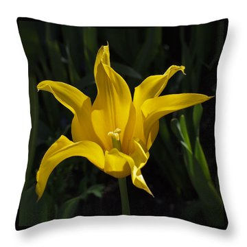 Yellow Star Tulip Throw Pillow by Rona Black