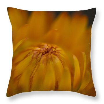 Yellow Strawflower Blossom Close-up Throw Pillow
