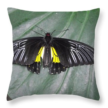 Golden Birdwing Throw Pillow by David and Lynn Keller