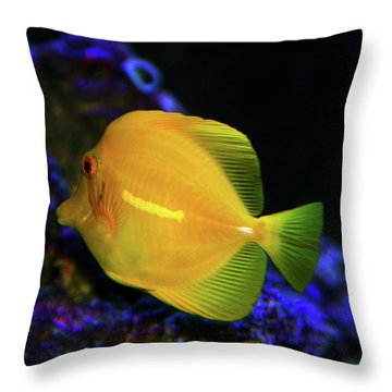 Throw Pillow featuring the photograph Yellow Tang by Anthony Jones