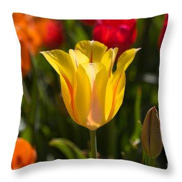 Yellow Tulip Throw Pillow by John Roberts