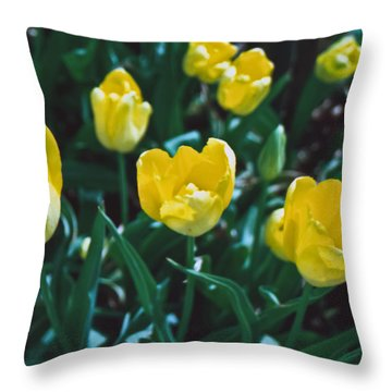 Throw Pillow featuring the photograph Yellow Tulips--film Image by Matthew Bamberg