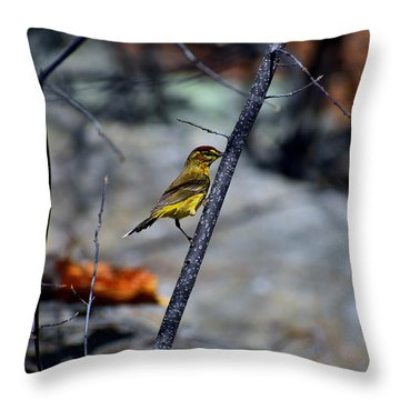 Yellow Warbler 2 Throw Pillow