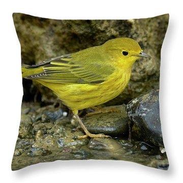 Yellow Warbler Throw Pillow by Doug Herr