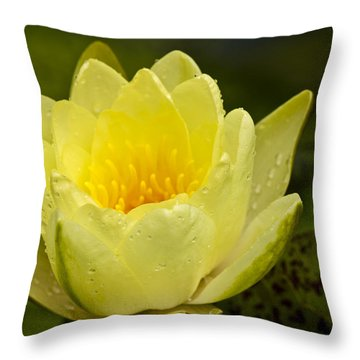 Yellow Water Lilly Throw Pillow