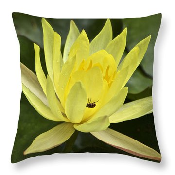 Yellow Waterlily With A Visiting Insect Throw Pillow
