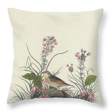 Yellow-winged Sparrow Throw Pillow by Rob Dreyer