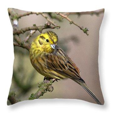 Yellowhammer Throw Pillow