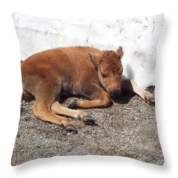 Yellowstone Bison Calf  Throw Pillow