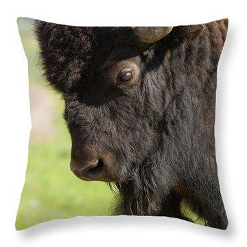 Yellowstone Bison Portrait Throw Pillow by Sandra Bronstein