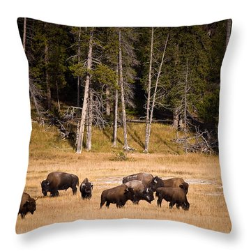 Yellowstone Bison Throw Pillow by Steve Gadomski