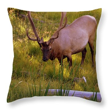 Yellowstone Bull Throw Pillow by Marty Koch