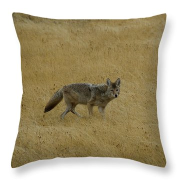 Throw Pillow featuring the photograph Yellowstone Coyote by Sue Smith