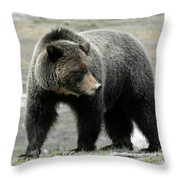 Throw Pillow featuring the photograph Yellowstone Grizzly A Pondering by Bruce Gourley