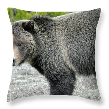 Throw Pillow featuring the photograph Yellowstone Grizzly On The Hunt by Bruce Gourley
