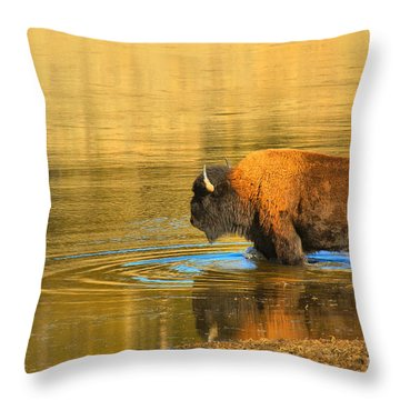 Throw Pillow featuring the photograph Yellowstone Solo Swimmer by Adam Jewell