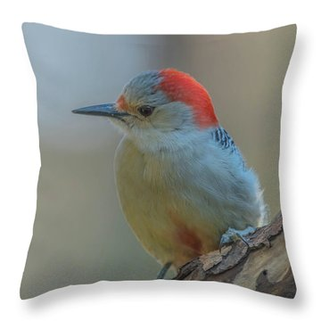 Young Red Bellied Woodpecker Throw Pillow