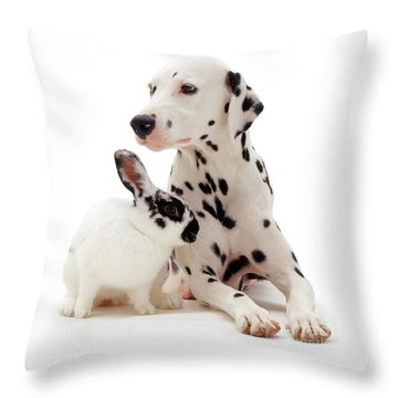 You Knocked My Spots Off Throw Pillow