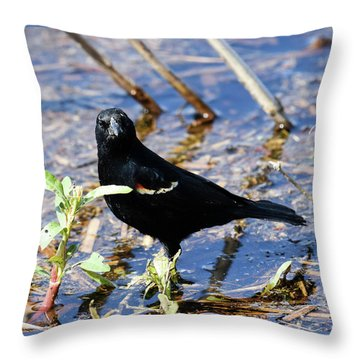 Throw Pillow featuring the photograph You Looking At Me by Gary Wightman