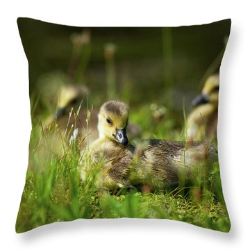 Throw Pillow featuring the photograph Young And Adorable by Karol Livote