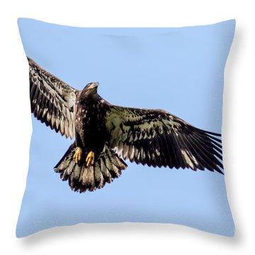 Young Bald Eagle Flight Throw Pillow