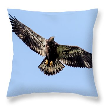 Young Bald Eagle Flight Throw Pillow