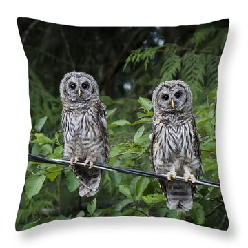 Young Barred Owls Throw Pillow