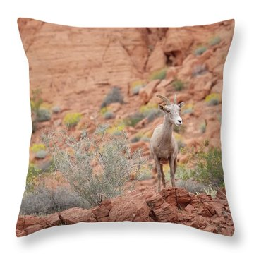 Throw Pillow featuring the photograph Young Big Horn Sheep  by Patricia Davidson