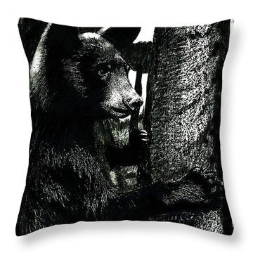 Young Black Bear In Tree  Throw Pillow