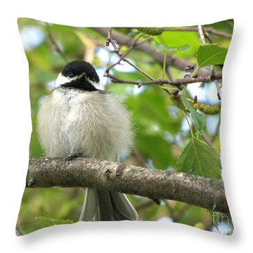 Throw Pillow featuring the photograph Young Black-capped Chickadee by Angie Rea