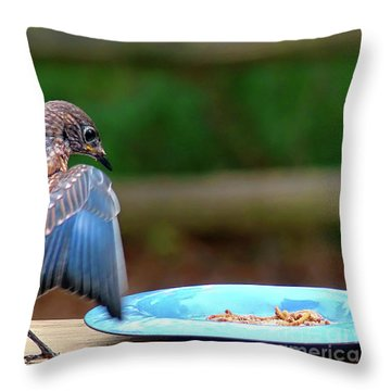Young Bluebird's Delight Throw Pillow by Sue Melvin