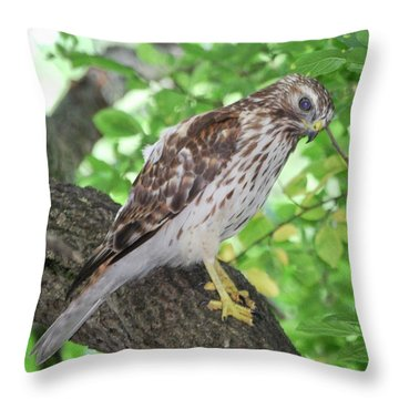 Young Red Shouldered Throw Pillow