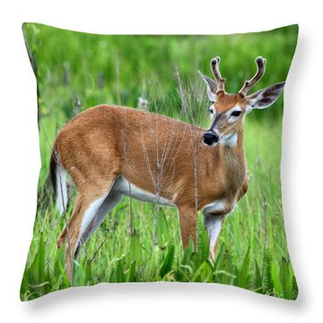Throw Pillow featuring the photograph Young Buck by Barbara Bowen