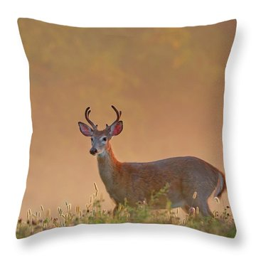 Young Buck Square Throw Pillow