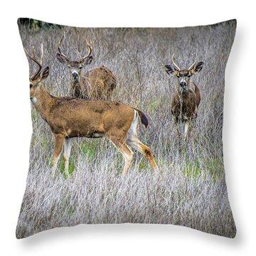 Young Bucks Throw Pillow