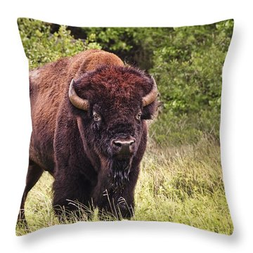 Young Buffalo Throw Pillow
