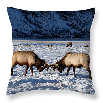 Young Bull Elk In Jackson  Hole In Wyoming Throw Pillow by Carol M Highsmith