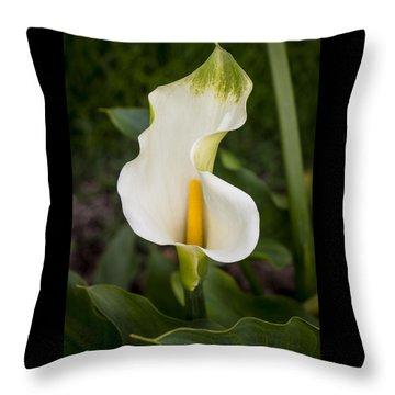 Young Calla Lily Throw Pillow