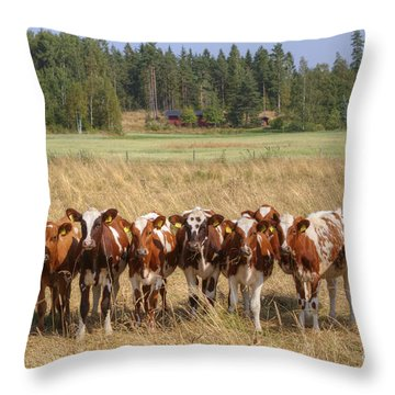 Young Calves On Pasture Throw Pillow