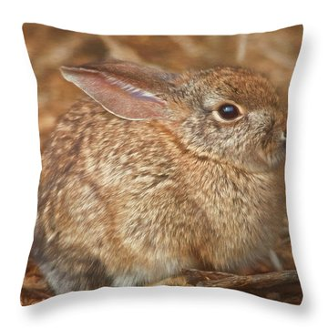 Young Cottontail In The Morning Throw Pillow