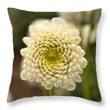 Throw Pillow featuring the photograph Young Dahlia by Brian Eberly