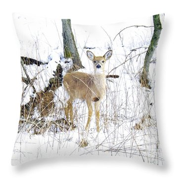 Young Doe And Spring Snow Throw Pillow