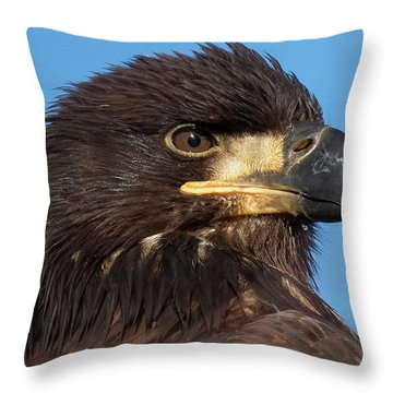 Young Eagle Head Throw Pillow
