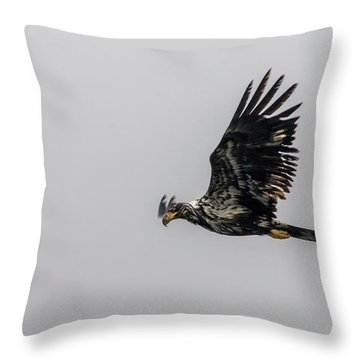 Throw Pillow featuring the photograph Young Eagle In Flight 07 by Timothy Latta
