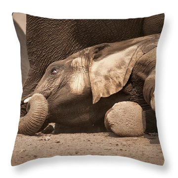Young Elephant Lying Down Throw Pillow