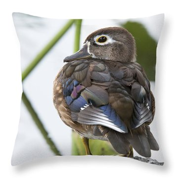 Young Female Wood Duck Throw Pillow