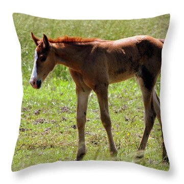 Young Foal Throw Pillow by Marty Koch