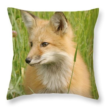 Throw Pillow featuring the photograph Young Fox by Doris Potter